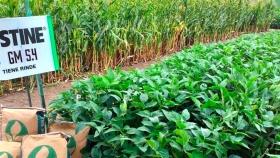 Semillas de soja y maíz: a la Argentina le llegó la hora de Stine