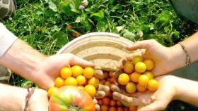 ¿Qué es un producto o alimento orgánico?