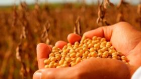 Campaña 2020/21: más multiplicadores trabajan para alcanzar la mejor semilla