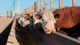 El feedlot se transforma. La apuesta de los Truppel: carne, fertilizante y... ¿energía?