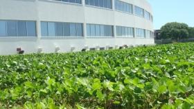 Bioceres busca emitir bonos sustentables por 150 millones de dólares