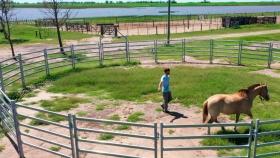 Corral circular para caballos
