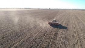 El trigo no se detendrá: Los planes de siembra marcan que se va a implantar todo lo posible