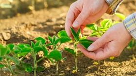De qué se trata el proyecto sobre fertilizantes para aumentar entre 8 y 18 MTn la producción nacional