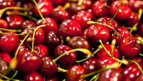 La producción de cerezas creció en Neuquén 18% en 2020