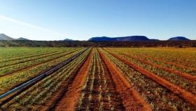 Oportunidad de inversión en azafrán de SA