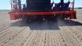 Plantación de coliflor con la trasplantadora automática Futura