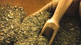 Histórico: la yerba mate llega a la India