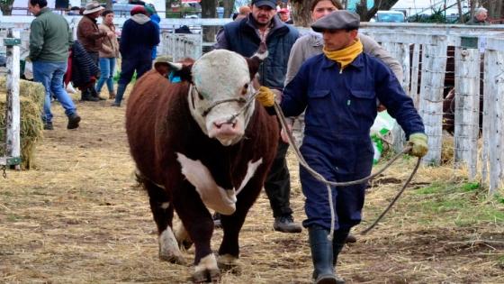 La Expo Rural de Viedma y Carmen de Patagones alcanzó los $25 millones en ventas