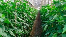 Control Biológico: Éxito Con Bajo Impacto Ambiental