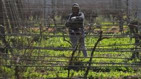 Productores de fruta de Chile perdieron 150 millones de dólares por temporal