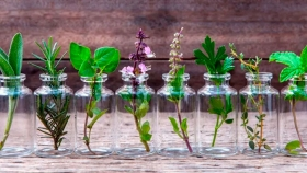 12 hierbas aromáticas para cultivar en agua