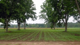 La agrosilvicultura ofrece una alternativa ecológica a la tala y quema