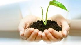 Cómo multiplicar tus plantas sin recurrir a las semillas