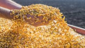 Los conflictos por el maíz no distinguen fronteras