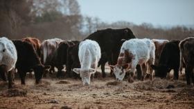 Ganadería: Insumos alimentarios para el cuidado de los animales