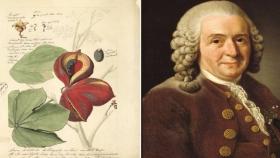 Los botánicos más famosos de la historia