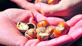 La primera descascaradora de frutos secos se inaugura en la Patagonia