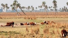 Más del 60% de los productores CREA experimentó daños por sequía en 2020