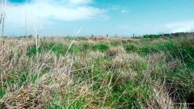 Con pastizales más diversos, el agro puede ayudar a frenar el calentamiento global