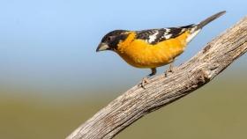 El valor de las aves en la vida de los seres humanos