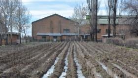 Quieren ampliar la matriz productiva de Malargüe con plantación de álamos