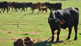 Reconocimiento a Vedevax BLOCK, la primera vacuna a subunidad direccionada contra el virus de la diarrea viral bovina