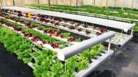 El emprendimiento familiar de producción hidropónica Panambí amplía su producción y apuesta por el cultivo de frutillas