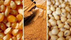 Según datos oficiales, se invertirán cerca de US$20.300 millones en la próxima campaña agrícola