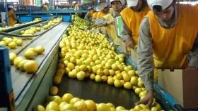 La agroindustria aporta el 22% del empleo privado argentino, sostiene un informe de FADA