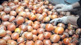 Recomiendan no sembrar cebolla temprana en el sur bonaerense