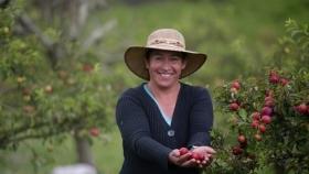 Las primeras variedades de ciruela genéticamente modificada en la Región empezarán a cultivarse este mismo año