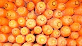 Aprovechan desechos de zanahoria para hacer biocombustible